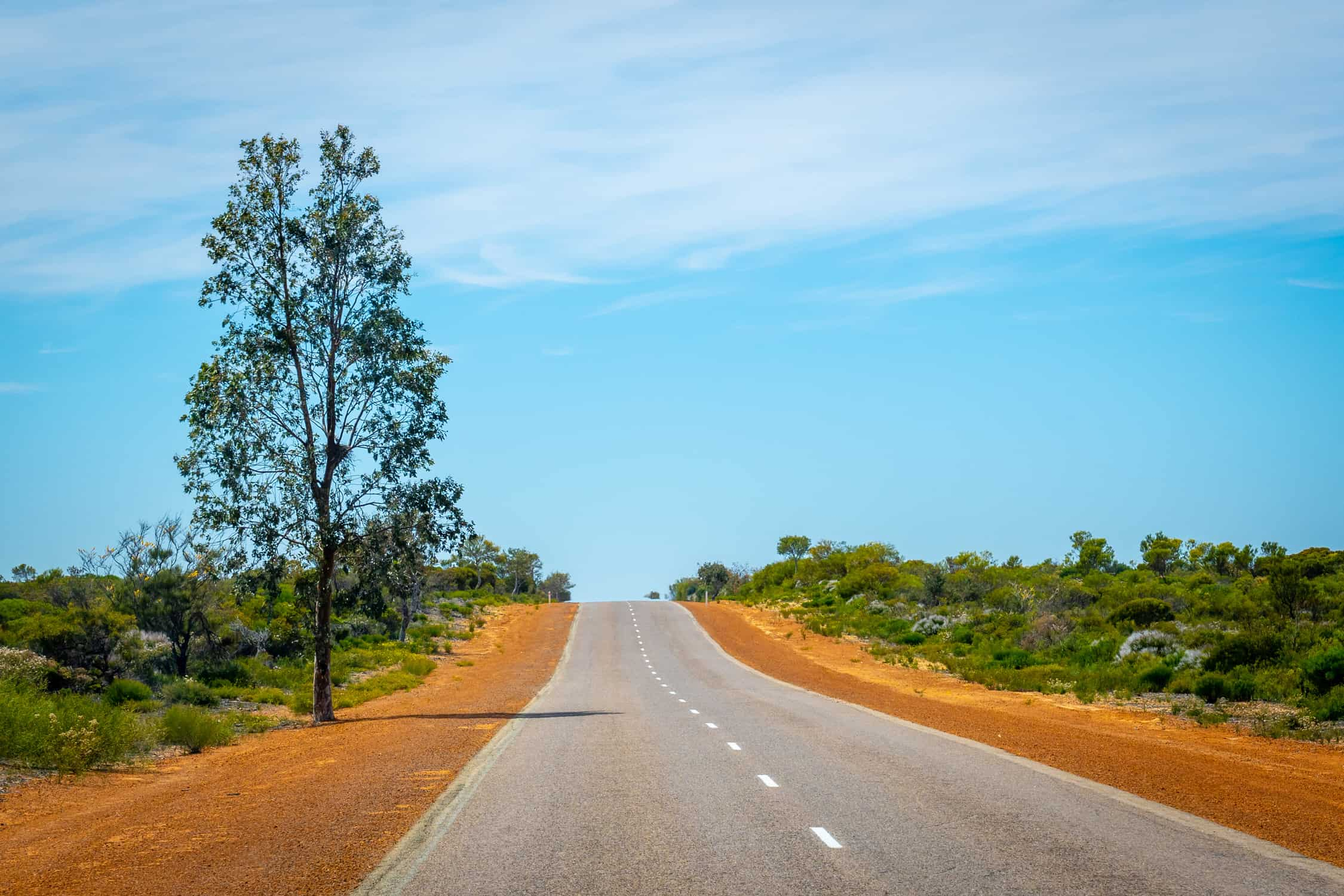 Only tree in Australian bush standing next to the straight road
